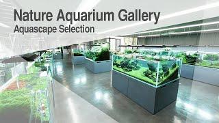 [ADAview] Nature Aquarium Gall…