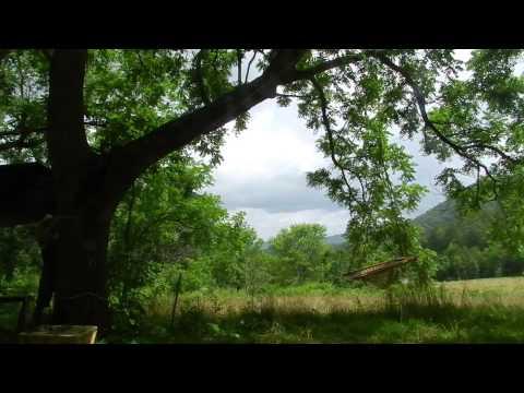 Josh Fox - Spring Bee Waltz - Sonic States Van Sessions - Asheville