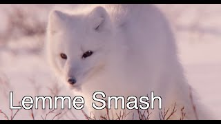 Lemme Smash - Fox Edition (Where's Helen?)