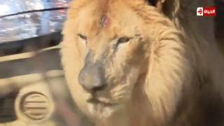 أحمد صفوت يتعرض لمفاجأة في «هاني في الأدغال» (فيديو)