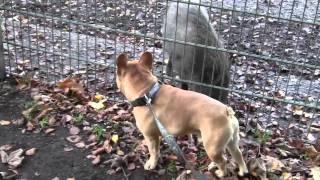 Jay-Joe mit den Wildschweinen !!!!