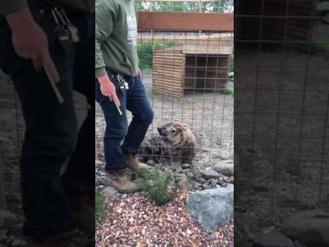 Thumbnail: Jordan & The Hyena at Animal Adventure Park, NY