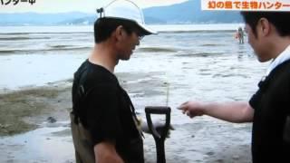 アマモ場は海のゆりかご。 いたわりながら遊ばせてもらいたいですね。