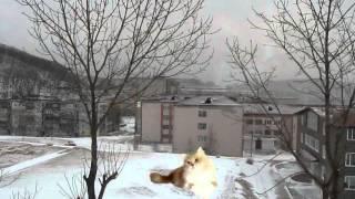 Кошка на снегу (клипарт)