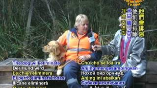 On Call 24/7: Search And Rescue Dogs Of Australia (1/2)