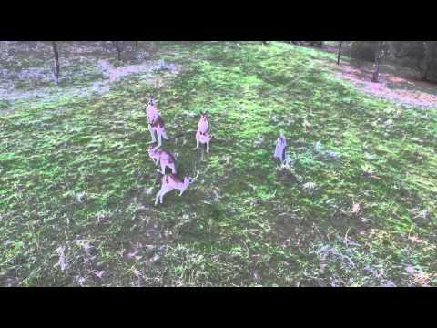 Wambuwuny Ngurambang-ga (Wiradjuri Language) Kangaroo in Country