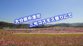大分県中津市の三光コスモス祭りへ行ってきた。