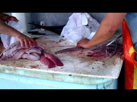 Đi Câu Cá Bluefish & Cá Ngừ - A Bluefish & Albacore Fishing Trip.