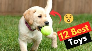 The 12 Best Dog Toys for Labradors | Which one is best for your dog?