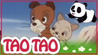 Tao Tao - 31 - הטיול