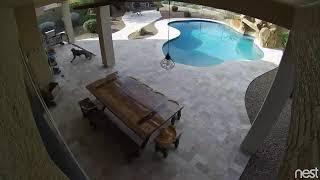 эти милые животные!!!! :)))