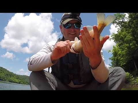 Trying Out The Drop Shot For Bass On Cave Run Lake- So Many Fish!