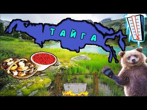 Тайга - гигантский БИОМ занимающий третью часть суши!
