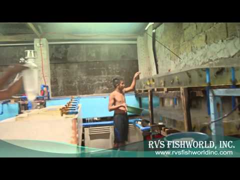 RVS FISHWORLD REAL, QUEZON SUB-STATION 03/30/2014 - SUNDAY