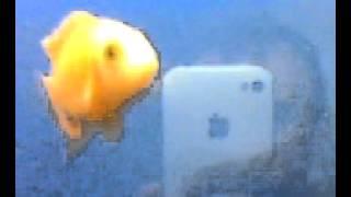 красивые аквариумные рыбки релаксация