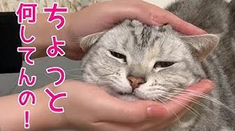姉妹 チャンネル 猫
