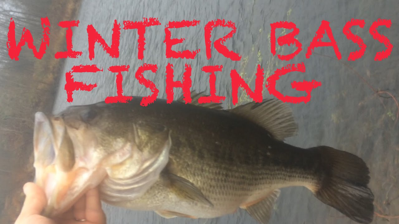 Winter bass fishing from the bank youtube for Winter bass fishing