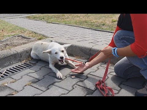 homeless-dog-keeps-following-people-on-the-street-for-a-heartbreaking-reason