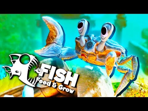 The Fish Trap With the The Colossal Crab Trap! - Feed and Grow Fish Gameplay
