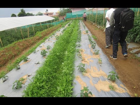 Integrated Crop and Water Management Program ICWMP