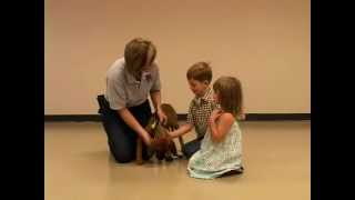 Safely Introducing Children to Dogs