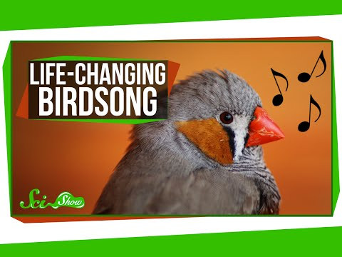 Life-Changing Birdsong