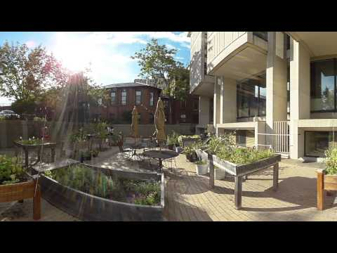 360° view of Harvard Longwood's Countway Community Garden