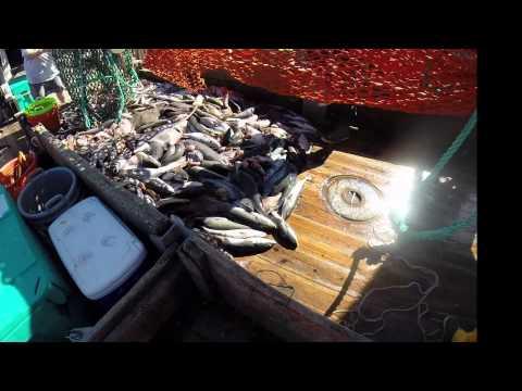 Selective Flatfish Device