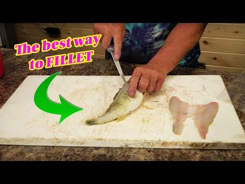 How to Clean a Perch (Perfect FILLET)