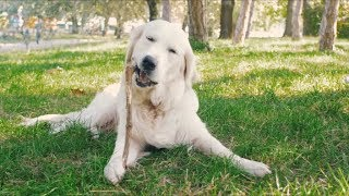 Pure Happiness and Joy - Uplifting Feel Good Music with Dogs