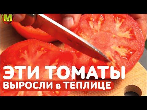 ТОМАТЫ В ТЕПЛИЦЕ: Сорт томатов Розовый Налив