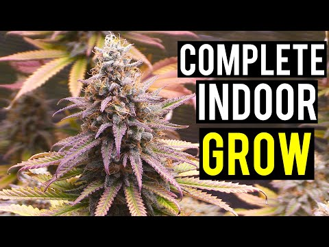 Seed To Harvest: A Complete Indoor Cannabis Grow