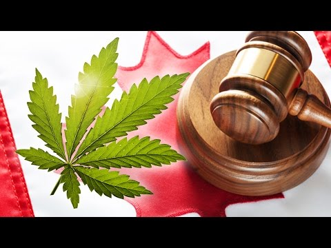 Marijuana Laws in Canada: What Do They Mean?