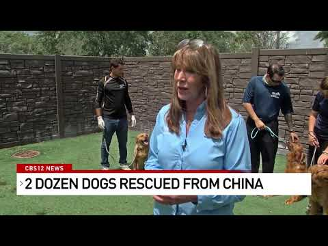 Dogs-rescued-from-meat-trade-in-China
