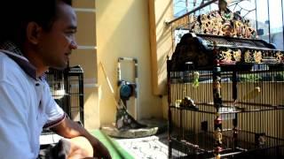 Perawatan Kenari Senopati Yr bersama Reds Devil/ H Samsulhadi Yogyakarta
