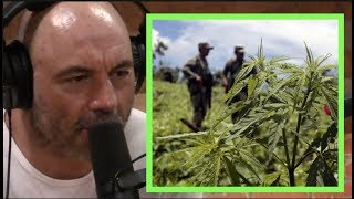 Joe Rogan   How Corruption and Legalized Weed Impacts Mexican Drug Trade w/Ed Calderon