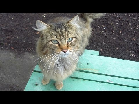 Cute cat waiting for me on the bench
