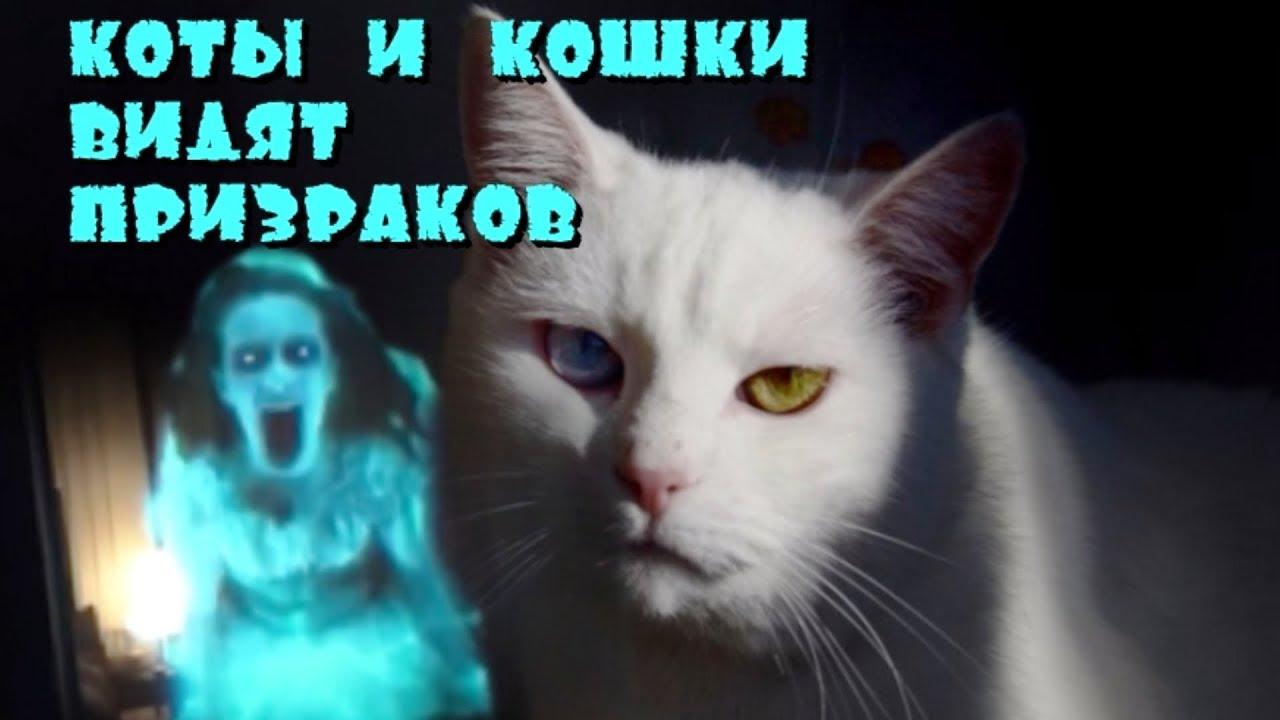 Кошки и коты видят призраков ?