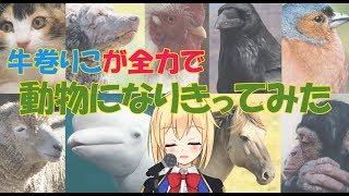【どっとライブ】【アイドル部】牛巻りこが全力で動物になってみた【声真似】