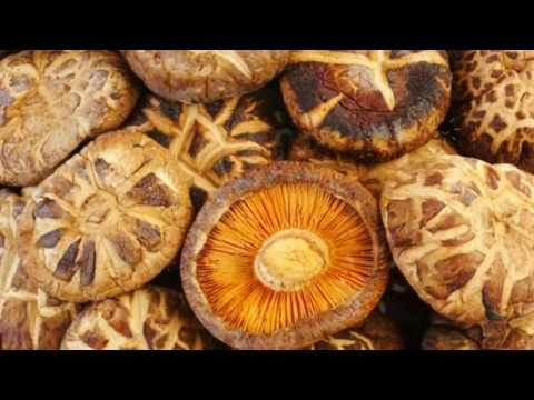 Календарь грибника: Определитель грибов - как отличить