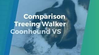 Comparison Treeing Walker Coonhound VS Foxhound