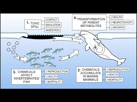 Arctic Marine Life Course (Pollutants)