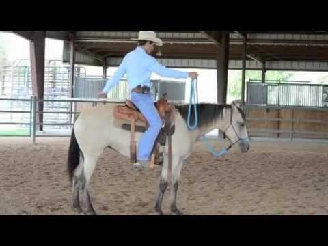 First Steps To Starting Your Horse, How To Start Your Horse In A Safe and Progressive Manner