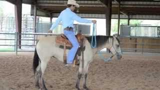first steps to starting your horse how to start your horse in a safe and progressive manner