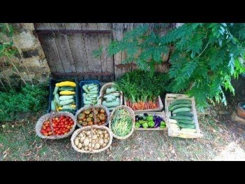 Permaculture - Les Jardins de Pan - 11 Août 2018
