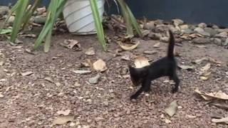 GinGer / the black kitten / PbI}|{NK / чёрный котёнок /