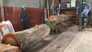 Cách tính nào là đúng cho khối lượng của một cây gỗ tròn? cách tính nào đang được áp dụng phổ biến?