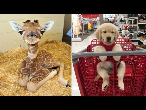 Baby Animals 🔴 Funny Cats and Dogs Videos Compilation (2019) Perros y Gatos Recopilación #3