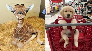 Baby Animals 🔴 Funny Cats and Dogs Videos Compilation (2019) Perros
