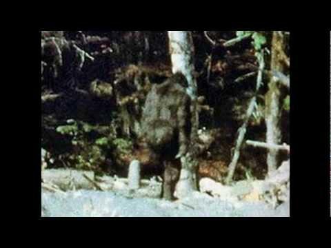Охота на йети / Bigfoot hunt...